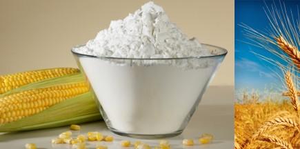 淀粉与蛋白